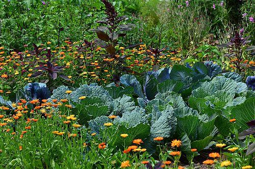 Raiffeisen Laborservice Mit 25jähriger Erfahrung Für Gartenfreunde