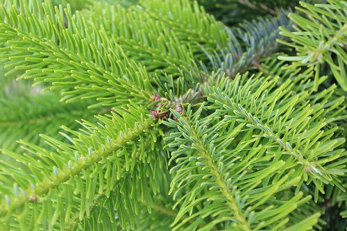 Weihnachtsbaum anbau